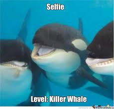 Whale Meme - level killer whale by foofymoonkin meme center