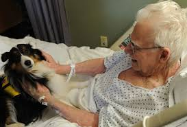 hospital lets pets visit their sick humans to make them feel