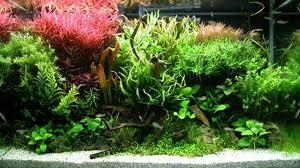 10 gallon planted tank led lighting co2 basics for aquarium plants petcha