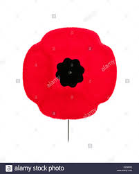 red poppy lapel pin for remembrance day stock photo royalty free