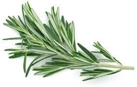 comment utiliser le romarin en cuisine les aromatiques au jardin cuisine et bienfaits bien être au