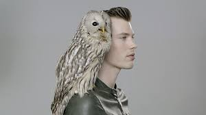 Owl Shoulder - profile portrait of with ural owl perched on his