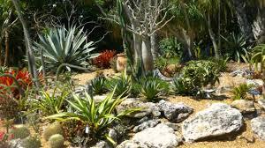 Botanical Gardens Sarasota Fl Tropical Fruit And Desert Garden At Selby Botanical Gardens