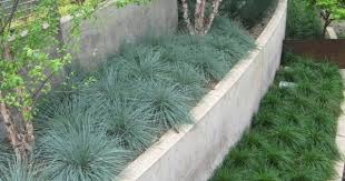 ornamental grass terraces color texture and low maintenance