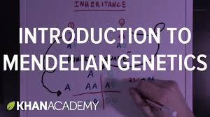 an introduction to mendelian genetics biomolecules mcat khan