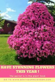 55 best beat your neighbor fertilizer images on pinterest flower