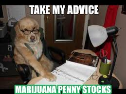 Funny Advice Memes - funny marijuana memes advice dog