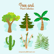 different types of trees great collection with different types of trees vector free download