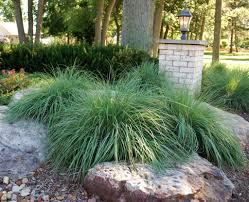 fresh drought tolerant landscape design sacramento 6861