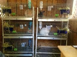 Rabbit Hutch Set Up Build A Rabbit Cage Constructing Rabbit Hutches And Housing For