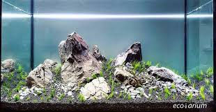 Aquascape Store Filipe Oliveira Faao U0027s Most Recent Flickr Photos Picssr