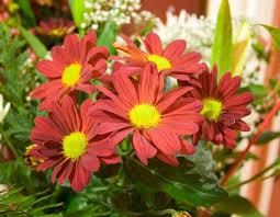 free christmas flowers stock photo freeimages com