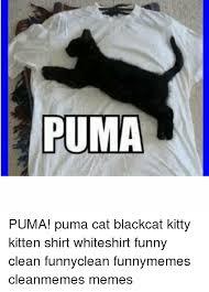 Puma Meme - puma cat meme