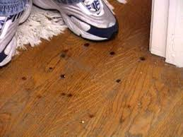 Laminate Floor Brush How To Remove Burn Marks On A Hardwood Floor Hgtv