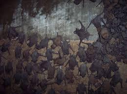 roof bats u0026