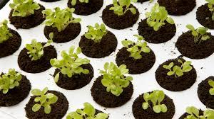 things to do in your february garden organic gardening blog