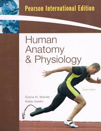 Human Anatomy Martini Anatomy And Physiology Book 7th Edition At Best Anatomy Learn