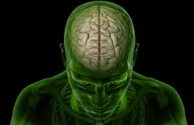 Anatomy Of The Brain And Functions Brain Anatomy The 4 Lobes Structures And Functions