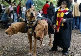 Creepiest Halloween Costumes 7 Creepy Halloween Costumes Dog Realitypod