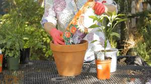 how to grow jalapenos in a pot garden space youtube