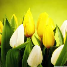 google images flower spring flowers hd desktop wallpaper high definition fullscreen