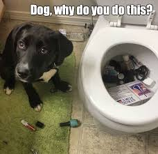 Dodg Meme - bad dog meme funny pictures quotes memes funny images funny
