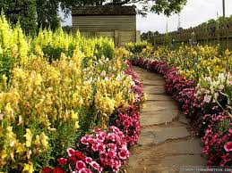 lily flower wallpaper 1366x768 51678