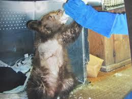 history of the zoo big bear alpine zoo