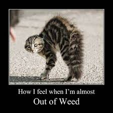 Stoner Dog Meme Generator - stoner cat out of weed funny marijuana meme weed memes