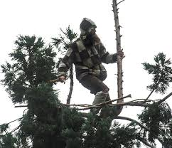 warrant issued for seattle who spent 25 hours in tree outside