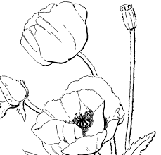 poppy coloring page for adults the graphics fairy