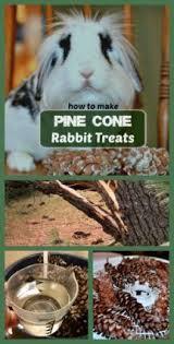 Kims Rabbit Hutch 186 Best For Bunny Foo Foo Images On Pinterest Bunny Rabbits