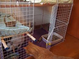 How To Build An Indoor Rabbit Hutch How To Build An Indoor Bunny Cage