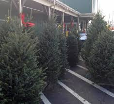 real christmas trees for sale christmas trees and decorations weaver s ace hardware