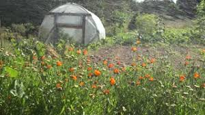vegetable garden with polyethylene greenhouse getting watered by