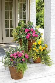 flowers fall color container planting idea best plants ideas on