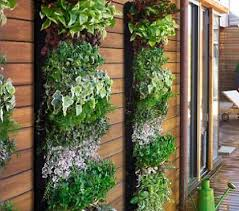 create your own vertical garden living walls planters and lettuce