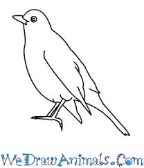 draw blackbird