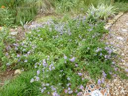 native plants for butterfly gardening benton soil u0026 water 18 best landscaping images on pinterest flowers gardening and