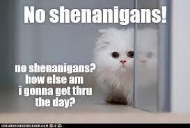 No Meme Cat - no shenanigans lolcats lol cat memes funny cats funny cat