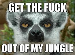 Lemur Meme - lemur memes google search funnies pinterest lemur memes and