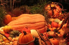 fall pumpkin wallpapers other autumn pumpkin orange green fall yellow wallpapers for hd