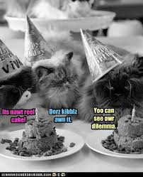 Awn It 9 Best Cats Getting Into Trouble Images On Pinterest Html