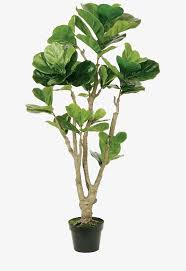 potted flowers green large leaf plant potted png green leaves potted potted