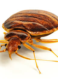 Bed Bug Detector What Can Kill Bed Bugs Vnproweb Decoration