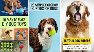 puppy leaks pet blogger challenge 2017 puppy leaks