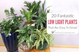 indor plants 20 low light indoor plants that are easy to grow get busy gardening