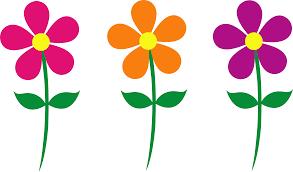 margarita cartoon transparent daisy flower clip art black and white free 2 clipartix