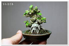 the challenge with the smallest trees bonsai bark