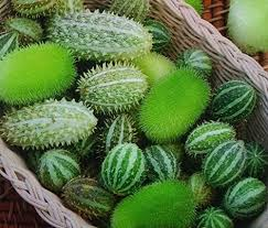 ornamental cucumber mixed seeds cucumis dipsaceus co